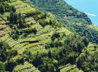 Coronavirus: crisi nera nel mondo del vino