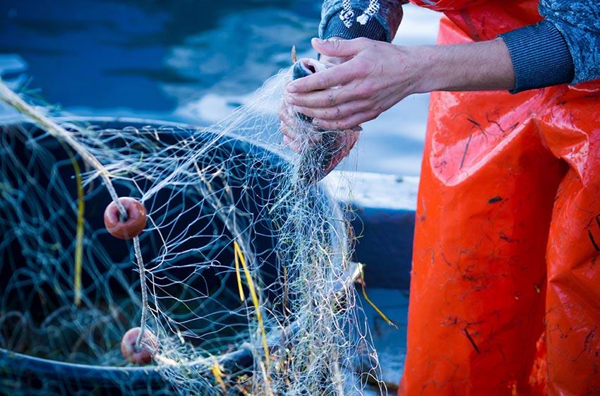 Pesca sostenibile, al via il bando della Regione Liguria da 260mila euro